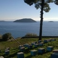 Honey Skopelos
